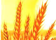 decadry Soggetto. wheat. carta 95gr. personalizzata a tema per stampanti laser & inkjet. formato a4 (21x29,7 cm), 95gr x mq, wheat.