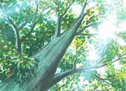 carta Carta personalizzata con soggetto -undergrowth- per stampanti laser & inkjet. Formato a4 (21x29,7 cm), 95gr x mq, personalizzata a tema.