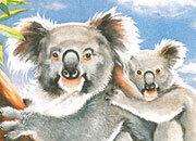 carta Carta personalizzata con soggetto -koala- per stampanti laser & inkjet. Formato a4 (21x29,7 cm), 95gr x mq, personalizzata a tema.
