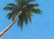 carta Carta personalizzata con soggetto -caribbean- per stampanti laser & inkjet. Formato a4 (21x29,7 cm), 95gr x mq, personalizzata a tema.