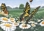 carta Carta personalizzata con soggetto -butterflies- per stampanti laser & inkjet. Formato a4 (21x29,7 cm), 95gr x mq, personalizzata a tema.