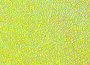 carta Carta personalizzata tinta unita -emerald- DEC804S.